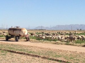 Enjoying the farmland and animals as well as the mountains